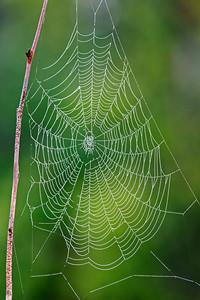 Spider Web - Cook County Road 6 - Grand Marais, MN