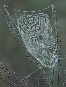 Spider Web - St. George Island State Park, FL - 01