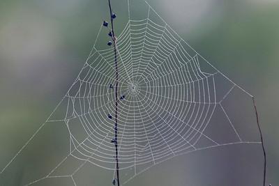 Spider Web - St. George Island State Park, FL - 02