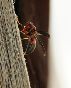 Wasps and Bees 2012