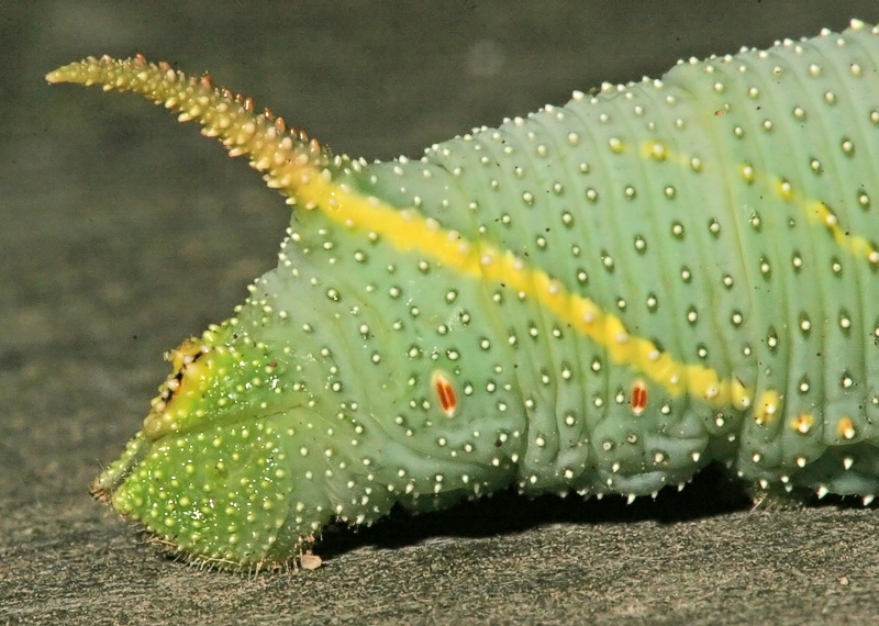 Taken with my Sigma 150 f/2.8 Macro Lens.
