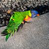 Lowry Zoo Tampa