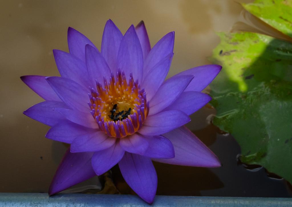 IMAGE: https://photos.smugmug.com/Insects/i-2GmdX2z/0/a0382bbd/XL/2-XL.jpg