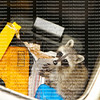 Young raccoon stuck in a garbage container looking for food