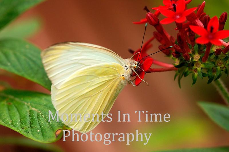 White on red blossom