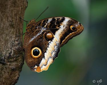 Butterfly Museum Broomfield, CO