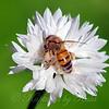 White Pollen View 1