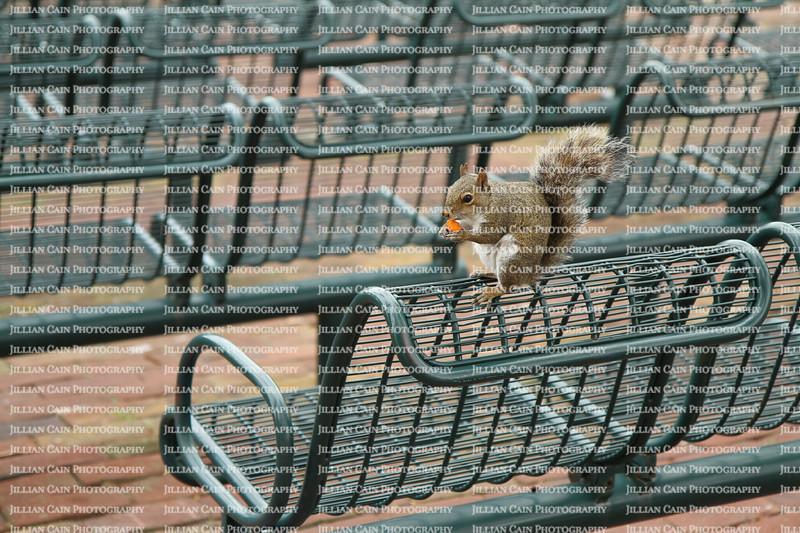 Squirrel eating on top of stadium seats