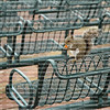 Squirrel eating on top of stadium seats