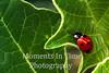 Ladybug fuzzy leaf