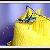 Katydid Nymph on Iris Bud
