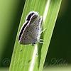 Above A Tiny Butterfly