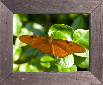 A framed picture of a butterfly.