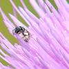 Tiny Bee Face