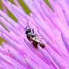 Tiny Bee body