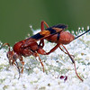 New Kind Of Wasp