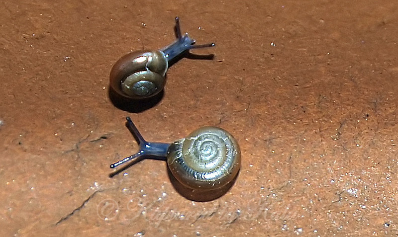 After The Rain, You Get Snails