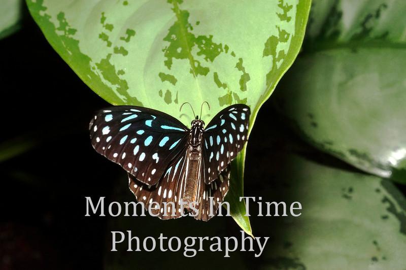 Blue speckled on leaf
