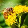 Fuzzy Pollinator
