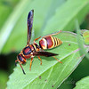 Potter Wasp View 1