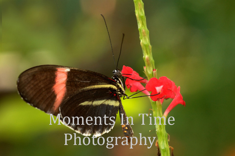 Butterfly pink blossom