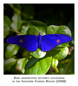 A little Photoshop work turns a boring butterfly into, ummm, this?