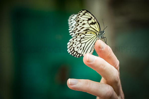 Butterfly Release at Butterfly House