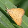 Moth With An Attitude