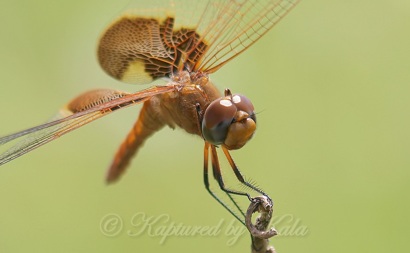 Red Saddlebags Close Up