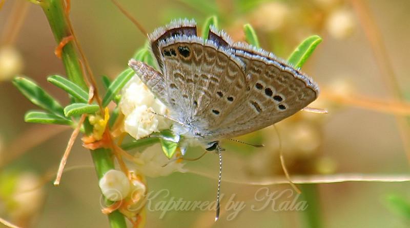 Butterfly Butt