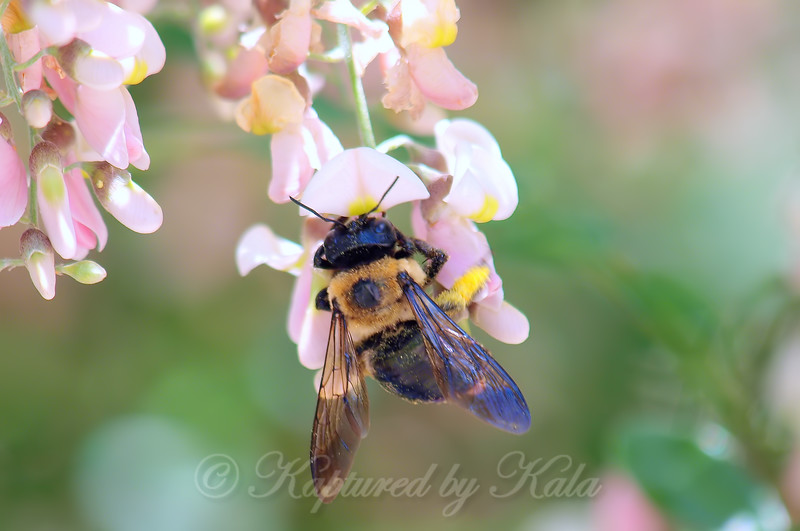 Pretty Pollinator on Pink Petals View 2