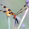 Halloween Pennant View 3
