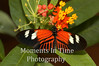 Tiger butterfly on blossom