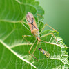 Leafopper, It's What's For Breakfast