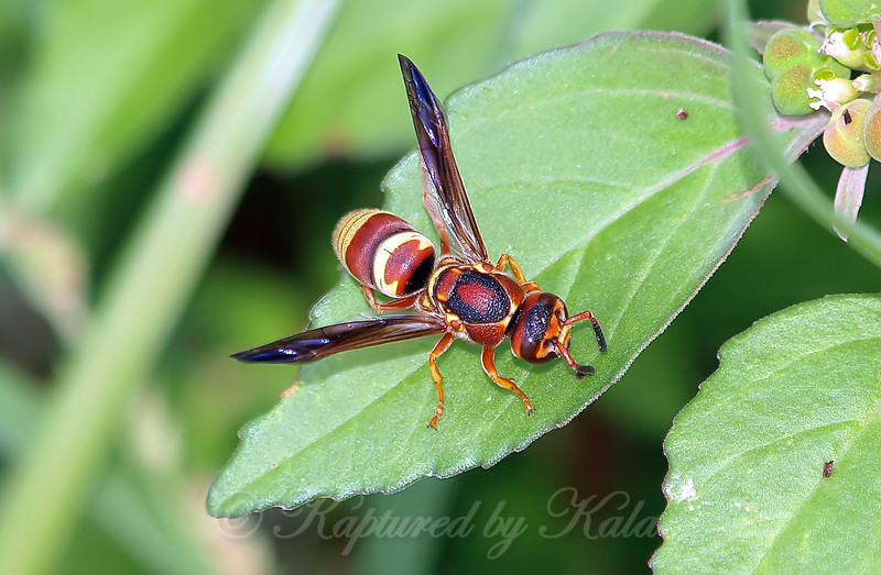 Potter Wasp View 2