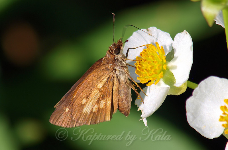 Drilling For Nectar