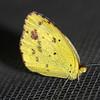 Little Yellow Butterfly on my Widow Screen
