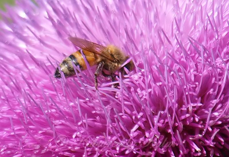 Spring Pollination