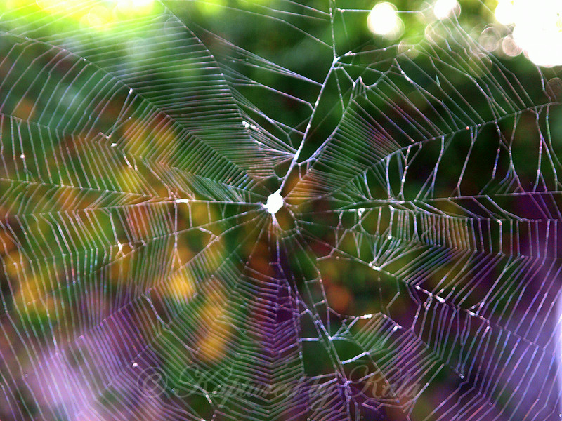 Psychedelic Web
