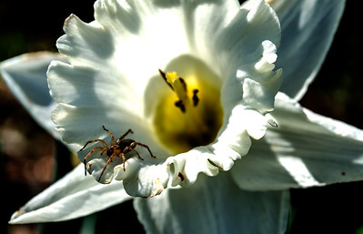 Spider lives in a flower