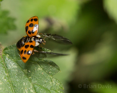 Harlequinn Ladybird, Pre-flight 2