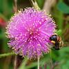 Pretty Pink Pollination