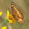 Butterfly Aslant
