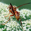 Texas Paper Wasp