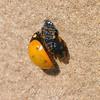 New Ladybug View 2