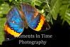 Leafy butterfly open