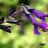 Deep Purple...With Bee