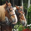 Team of two horses on Mackinac Island, Michigan