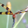 Halloween Pennant View 2