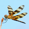 Halloween Pennant Grinning At Me